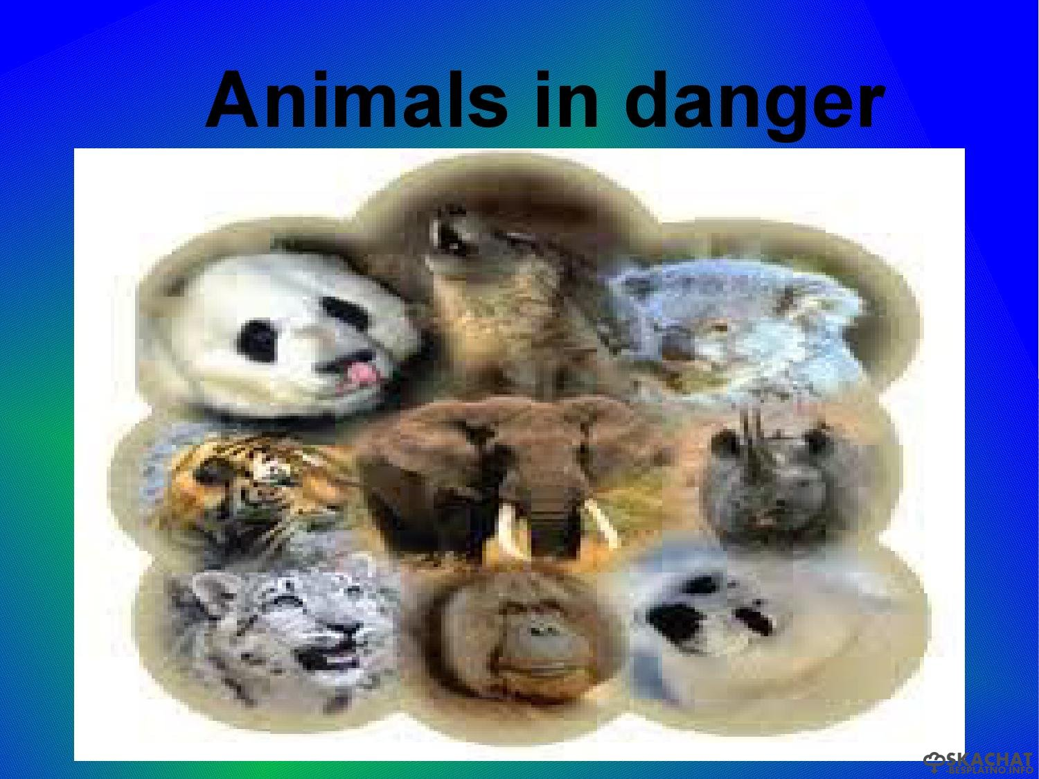 endangered animals photo essay Endangered animals list endangered animals list the african wild dog is listed as an endangered species as african wild dog population submit your photo.